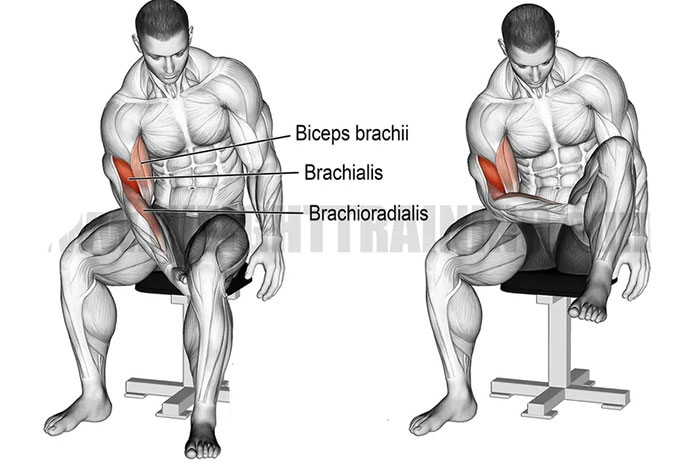 bicep curl with leg